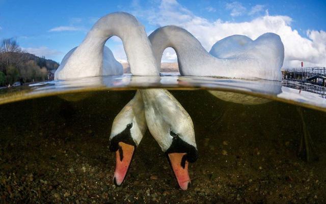 Chiêm ngưỡng những bức ảnh đẹp đến nghẹt thở tại Underwater Photographer Of The Year 2018